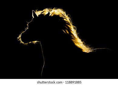 Horse silhouette isolated on black background