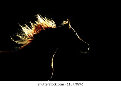 Horse silhouette on the dark background