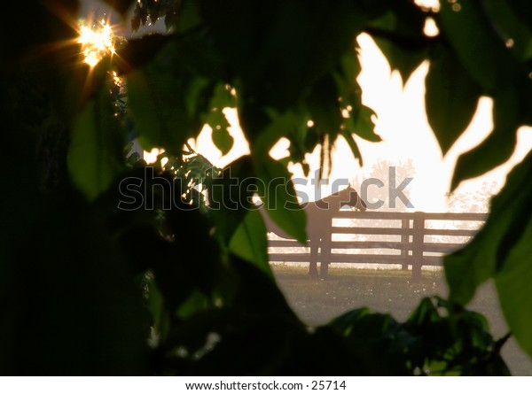 Horse silhouette with a sun star coming through the leaves.