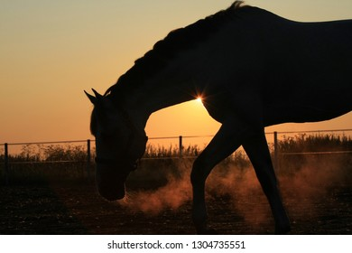 Horse silhouette at sunrise in the field