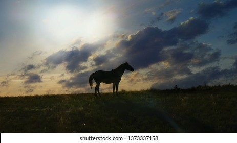 a horse silhouetted against an evening sky out on the prairie.