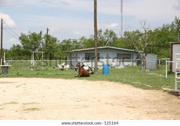 Horse sitting like dog in yard