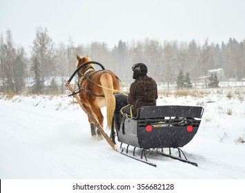 Horse and sleight in snowfall in Finland