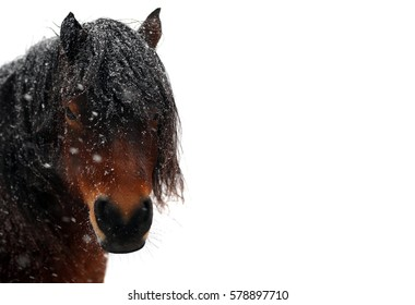 Horse in the snow isolated on white background.
