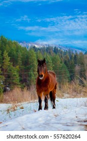 horse in the snow Horse in the mountains