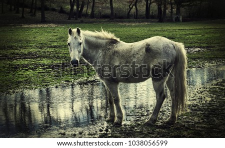 horse in a sodden field