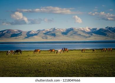 Horse at Song Kul Lake in Kyrgyzstan