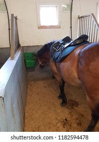 Horse in a stablebox