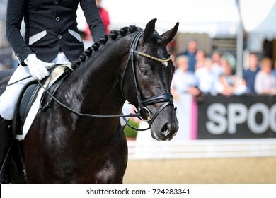 Horse stallion rider in step at a dressage event