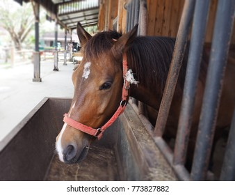 Horse stallions in the enclosure of a barn