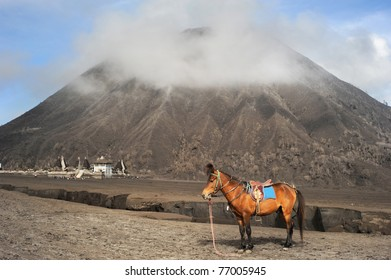 Horse stand in front of vulkano in Jawa, Indonesia
