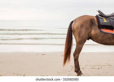 The horse stand on the beach with number 1 on saddle