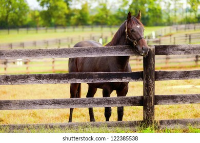 Horse standing by the fence