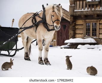 A horse standing in the farmyard surrounded by rabbits