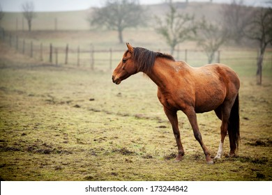 HORSE STANDING IN THE FIELD ALONE