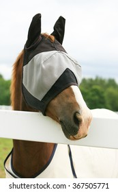 A horse standing looking over a fence with a fly mask on