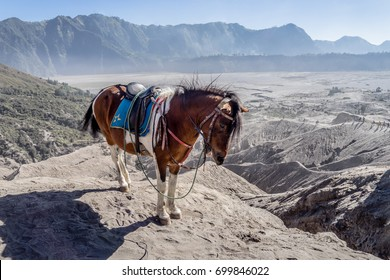 Horse standing on the cliff