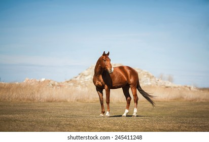 horse standing on the field