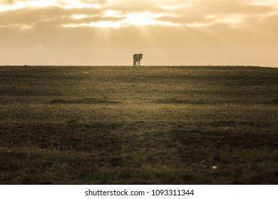 Horse standing on the grassland
