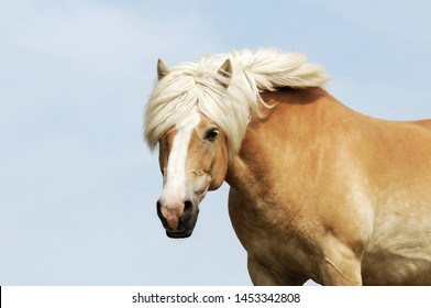 horse standing on pasture and looking