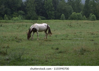 Horse standing in the rain in a field