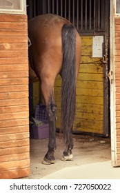 The horse is standing in the stall behind the viewer.