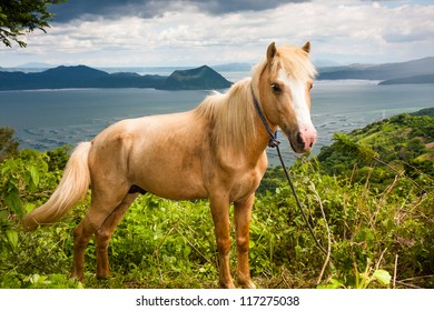 A horse standing upright, against a beautiful view of a crater lake below.
