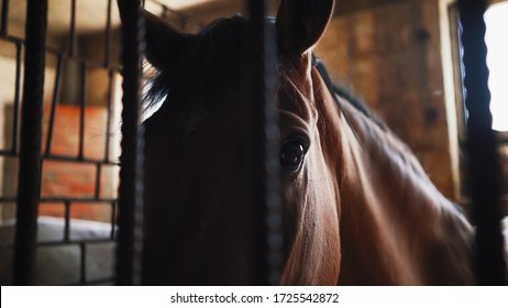 A horse stands in a horsebox behind a metal bars.