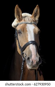 horse stands on a black background