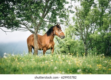 Horse stands under the tree with mountains at the background. Summer landscape with a horse at mountains.