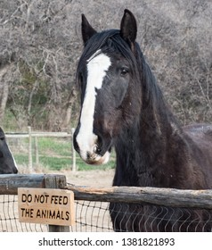 A horse stretching its neck over a fence for food next to a sign that says do not feed the animals.