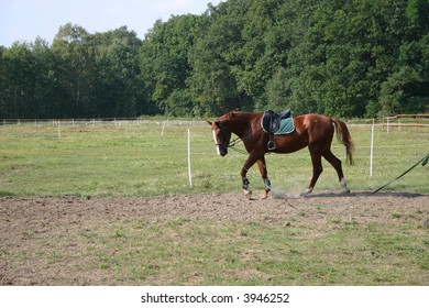 Horse in the stud farm