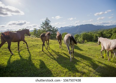 horse in summer hokkaido