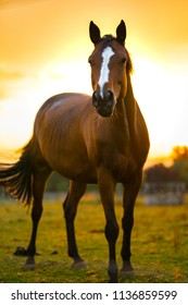 Horse in the sundown light. Bright colors of the grass and sky.
