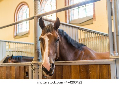 A horse in the Swedish Royal stables