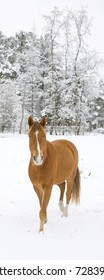 Horse that seems to come out of a winter snow storm