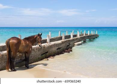 Horse Tied to Caribbean Beach Pier