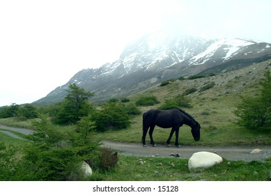 Horse in Torres del Paine National Park - Patagonia, Chile