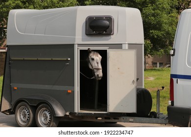 horse in towing horse trailer looking out