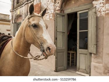 Horse in traditional house of San Antonio de Areco, Buenos Aires