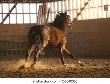 Horse training inside