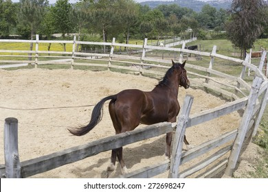 Horse training in a pen