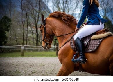 Horse training in Roveredo (GR)