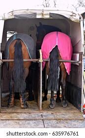 Horse transport