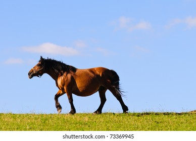 Horse trotting across a meadow in the evening sun