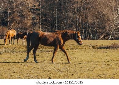 Horse in Urdaibai (Basque Country) - Shutterstock ID 1615175515