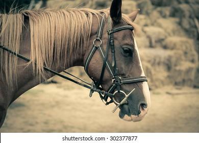 Horse vintage style portrait
