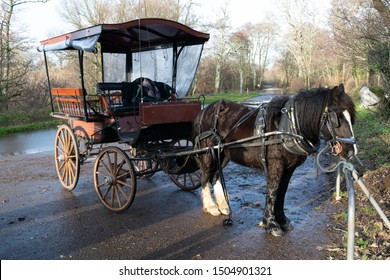 Horse and wagon of a jaunting car in the Killarney National Park in Ireland