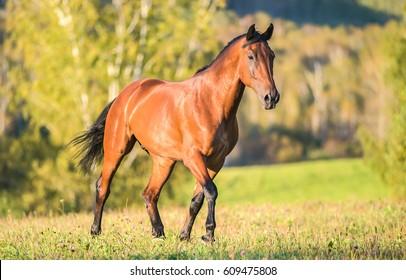Pferdewanderung auf dem Feld