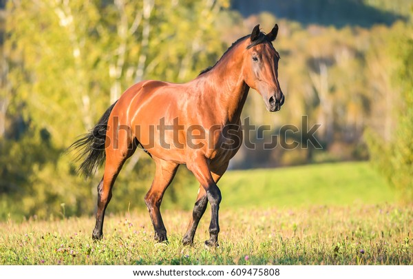 Horse walking in field